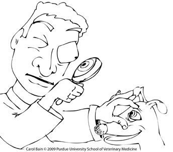 Free Coloring Pages College Of