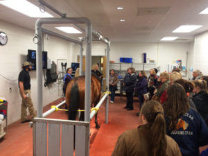 Dr. Sandy Taylor demo at the Horseman's Forum