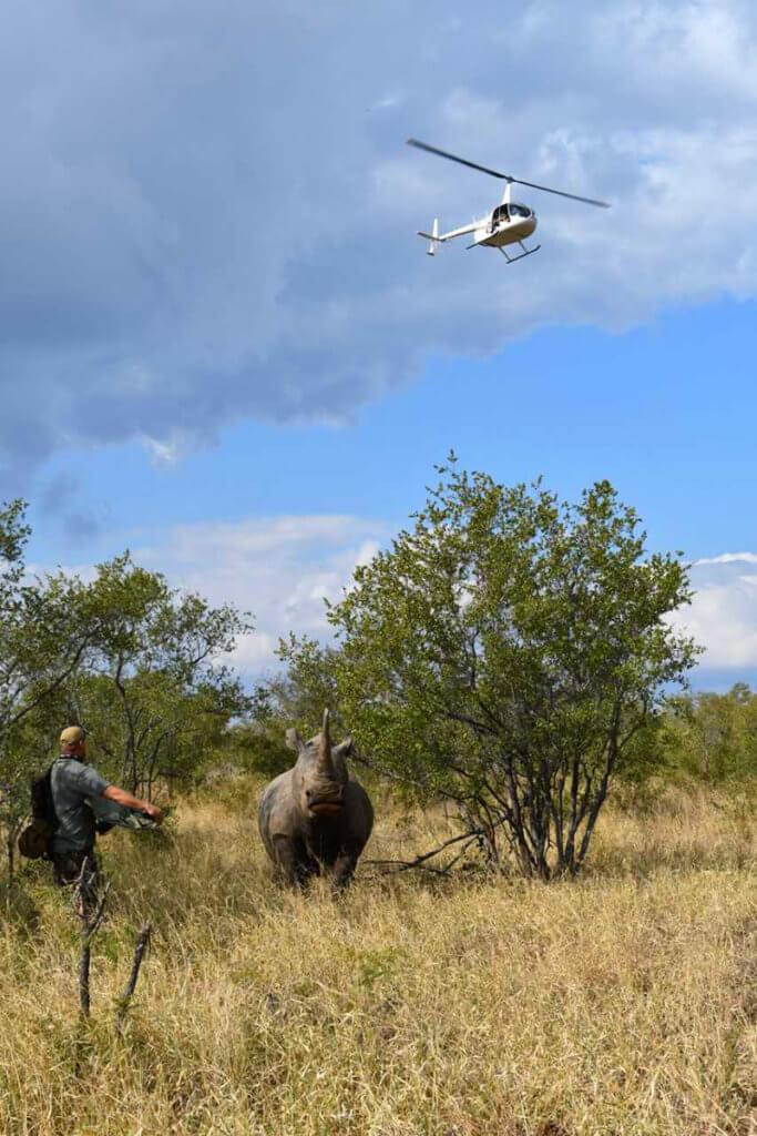 Rhino pictured during fieldwork