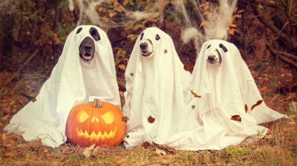 "Keep Your Pets Safe on ""Howloween"" by Being Mindful of the F E A R"