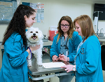 Pet Professor Drew pictured with veterinary nursing students