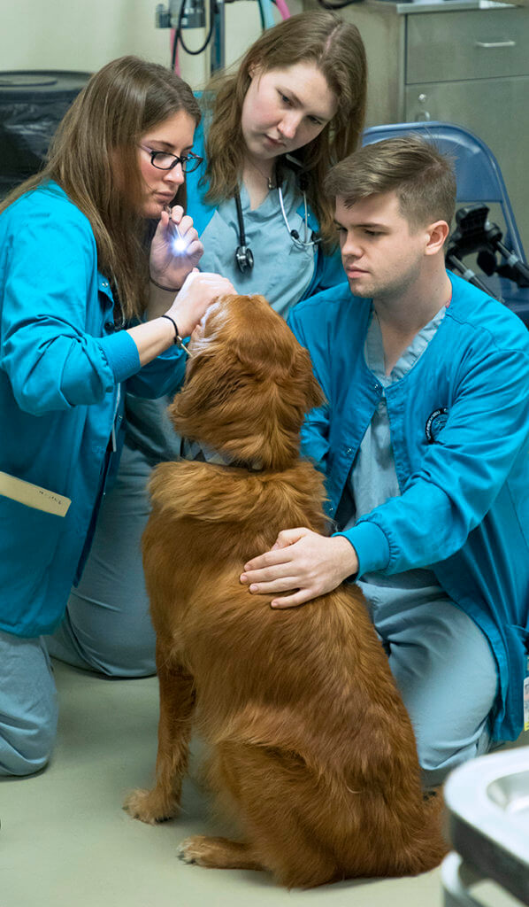 students pictured performing an eye exam on Tub the dog