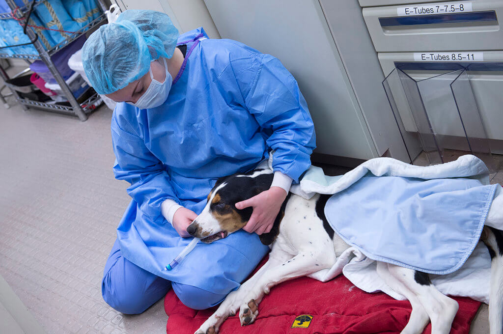 Veterinary student pictured with Jake the dog following neuter surgery
