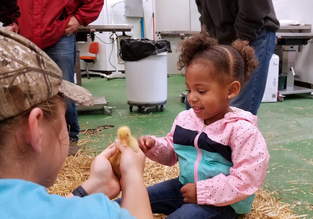 Small child reaches for a baby chick held by a Purdue veterinary student