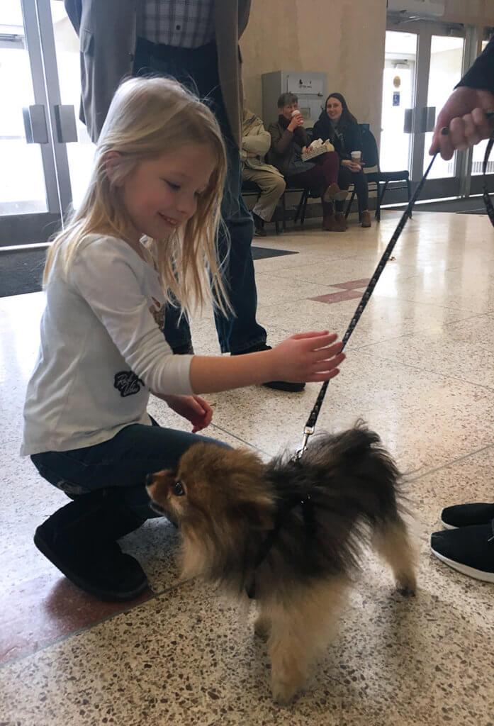 A little girl pets Teddy the Pomeranian