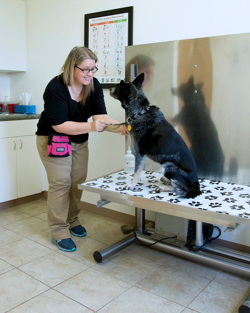 Alicea pictured treating a dog in an exam room