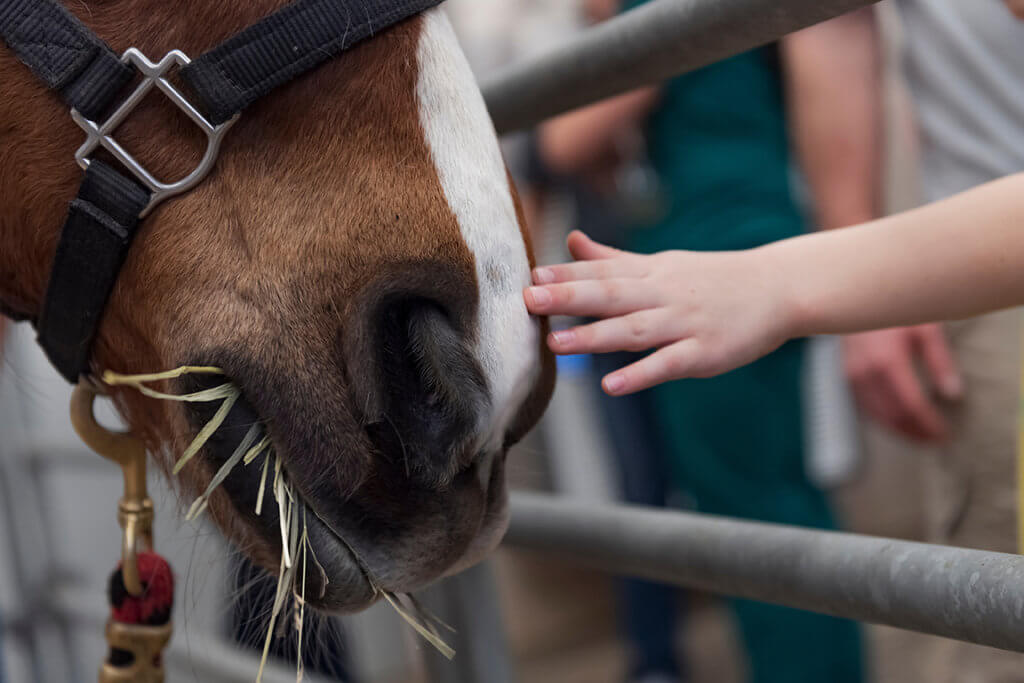 A child reaches out to touch the nose of a horse while the horse chews on hay