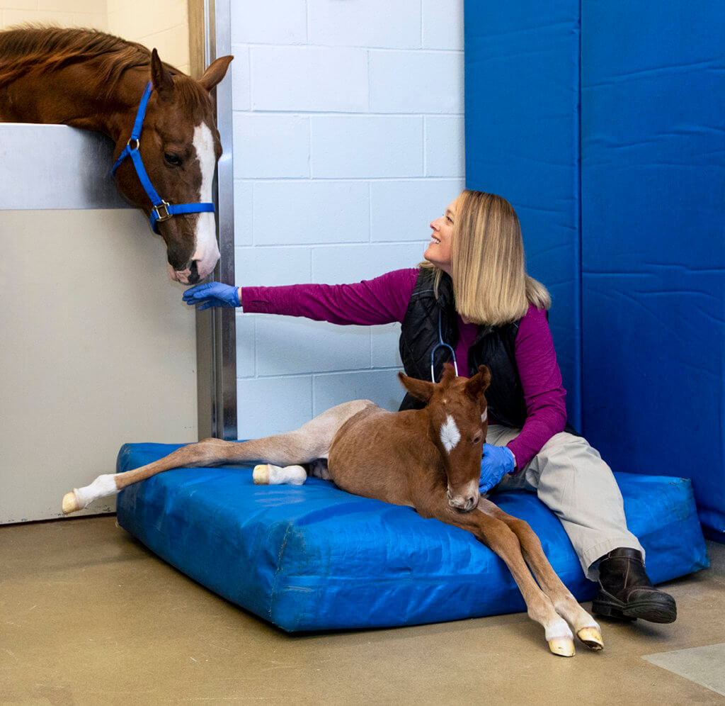 Sandy Taylor sits with foal on a padded mat while the foal's mother stretches her neck over the doorway