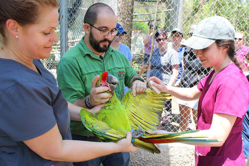 A wildlife veterinarian demonstrates proper handling technique of a macaw while two participants assist and additional participants look on