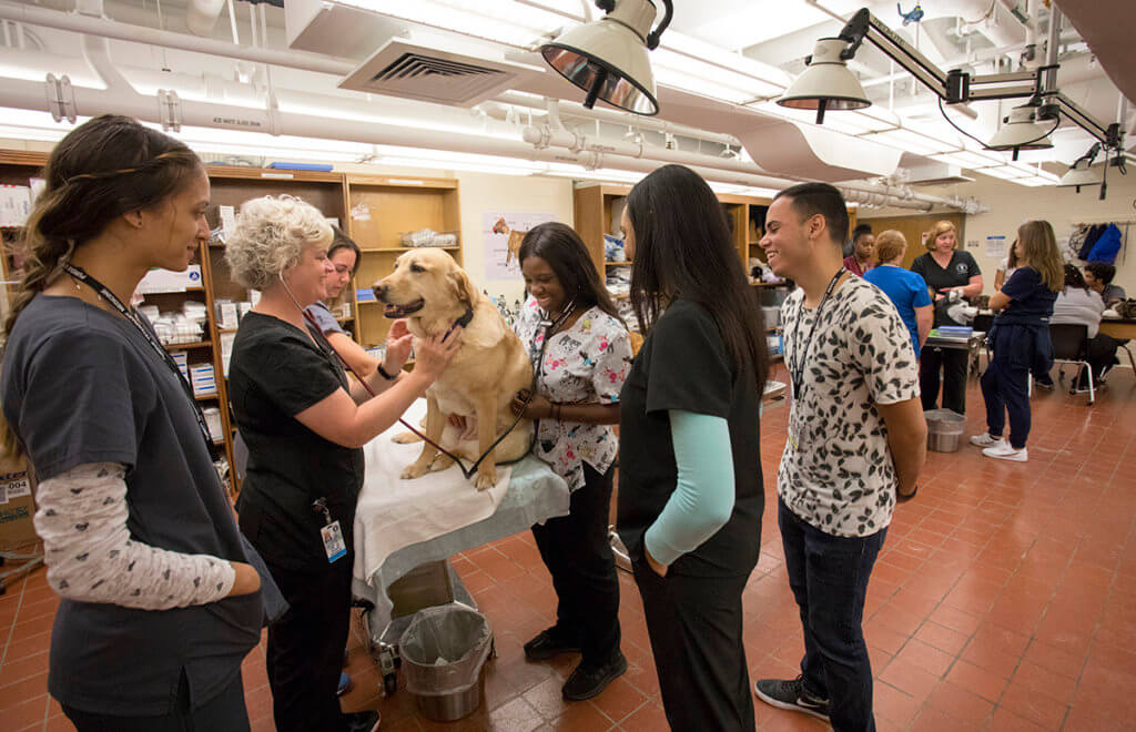 Participants listen to a yellow Labrador's heart with Danielle Buchanan and additional participants work with veterinary technicians on small animal exam skills