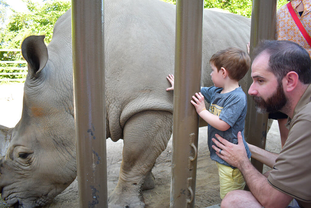 A boy held by his dad touches the side of a rhino