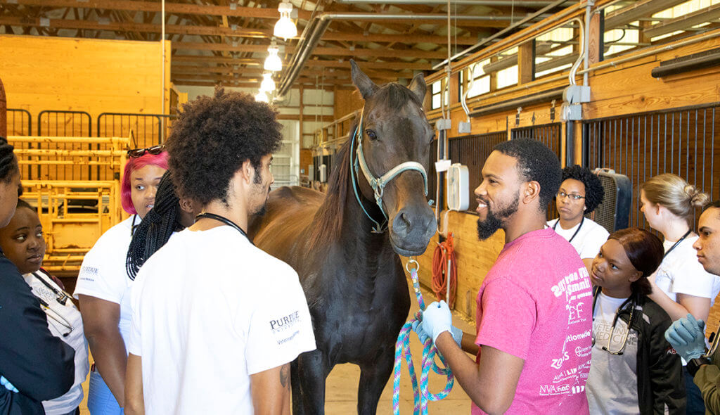 Edris holds the reigns of a horse in the Equine Health Science Annex with Vet Up! College participants gathered around