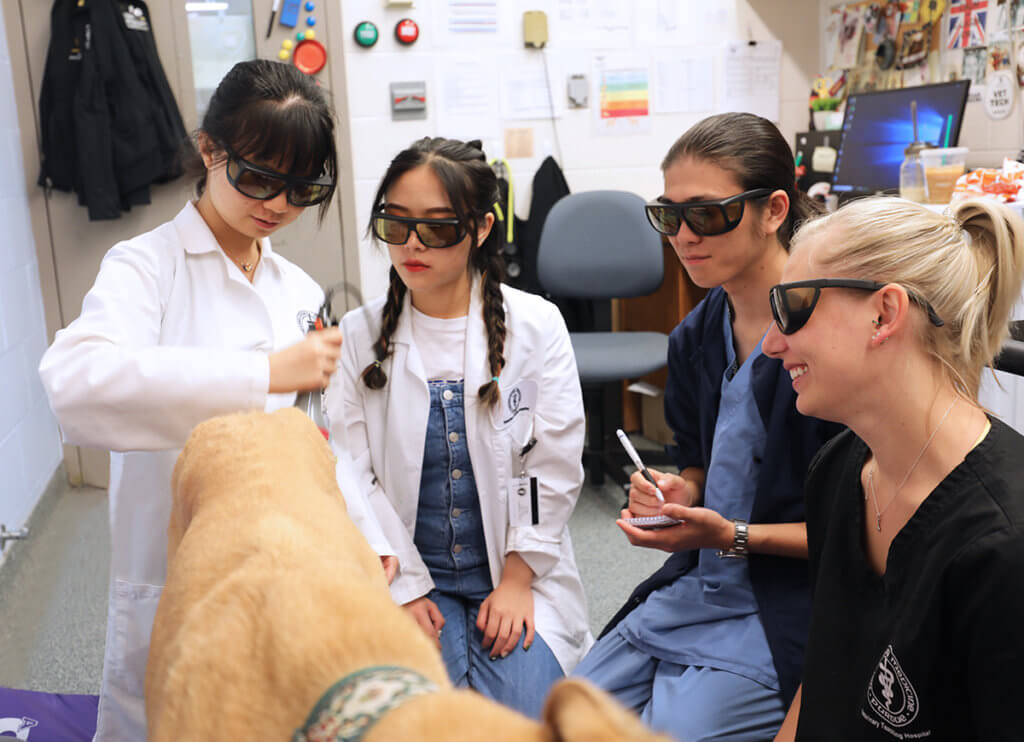 International exchange students work with Jessica Bowditch on a dog in the rehabilitation service