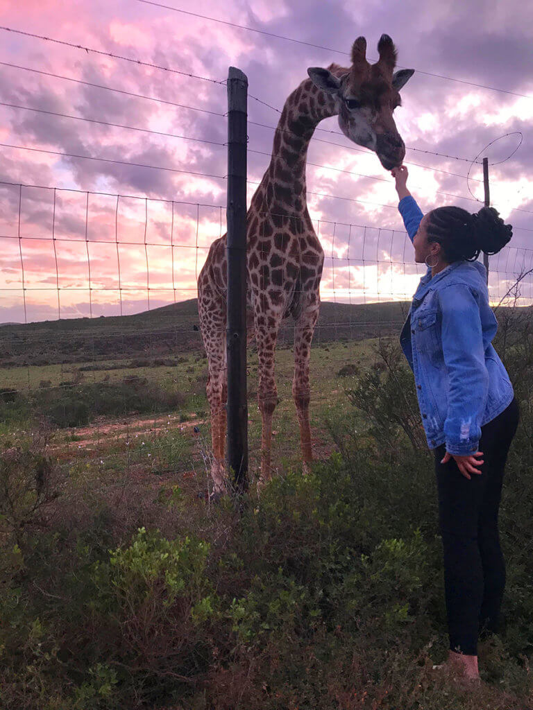 A women reaches up and touches a giraffe's nose against a beautiful sunset background