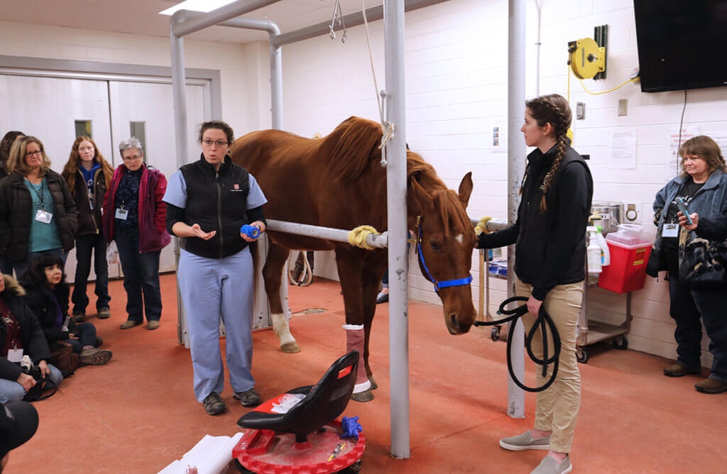 Molly stands beside a horse with a bandage on its leg as attendees gather around her