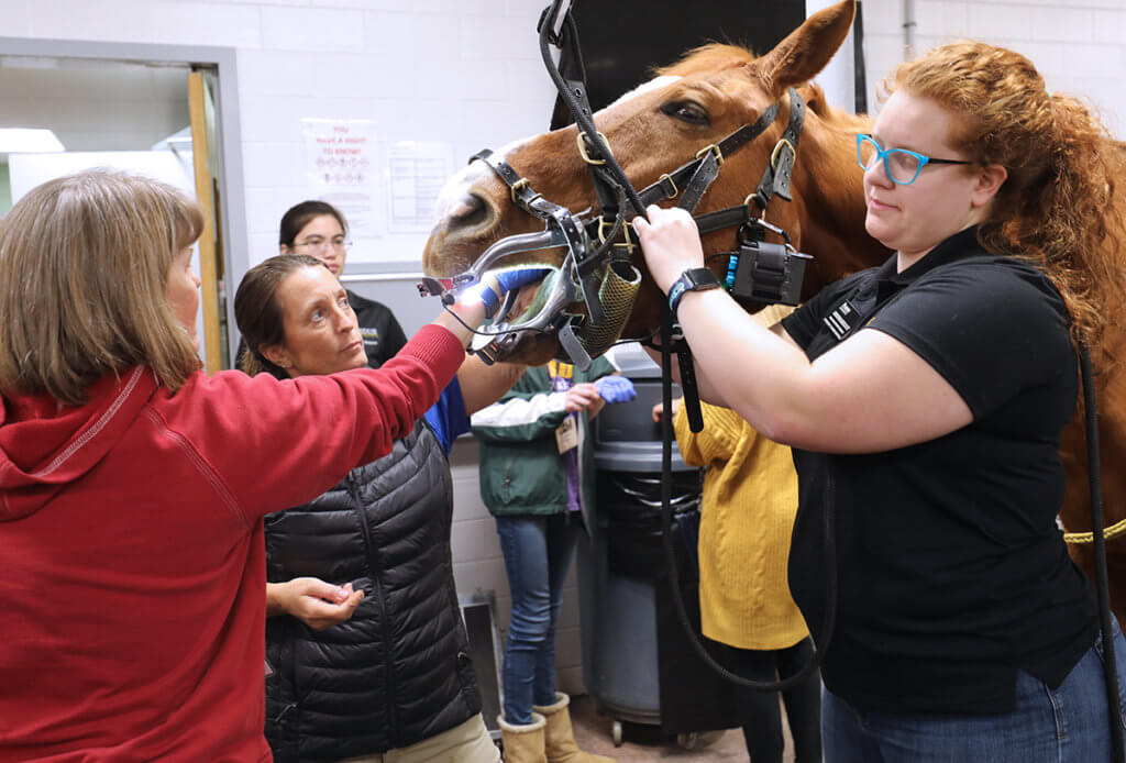 An attendee reaches her hand inside the horse's mouth guided by Dr. Farr