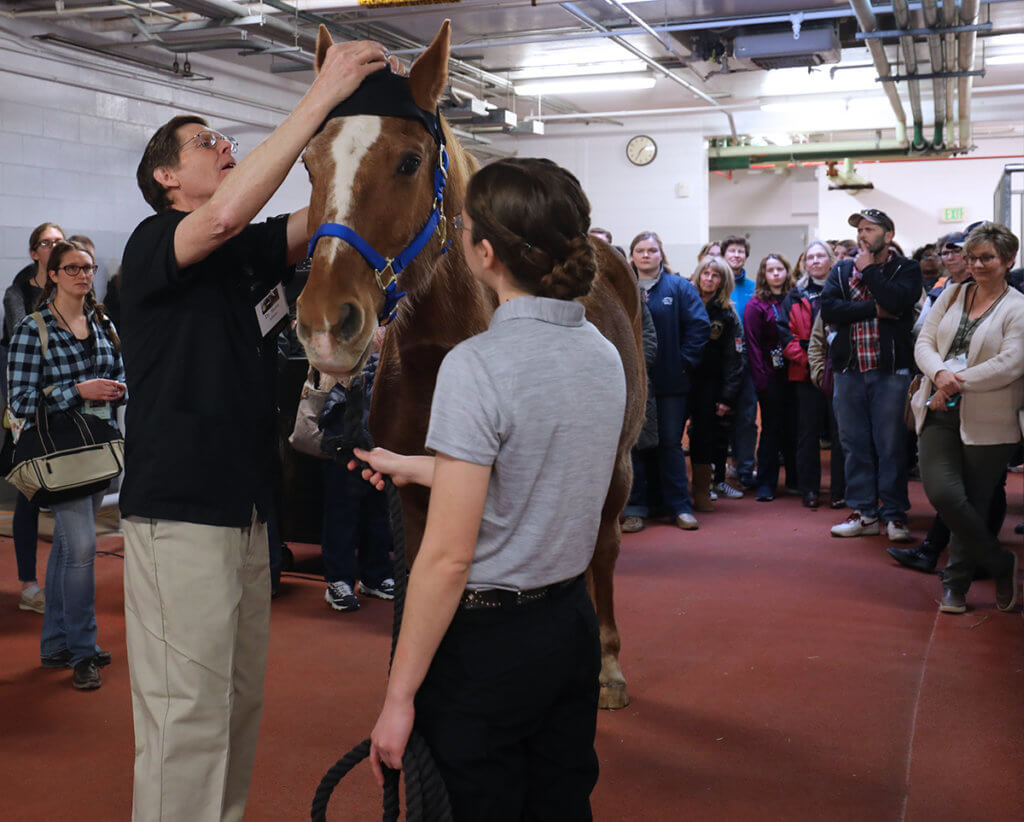 Dr. Adams attaches sensors to a special hat on the horse's head as attendees look on