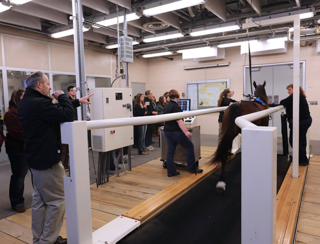 A crowd watches an equine treadmill demonstration led by Dr. Couetil with assistance from veterinary nurses.