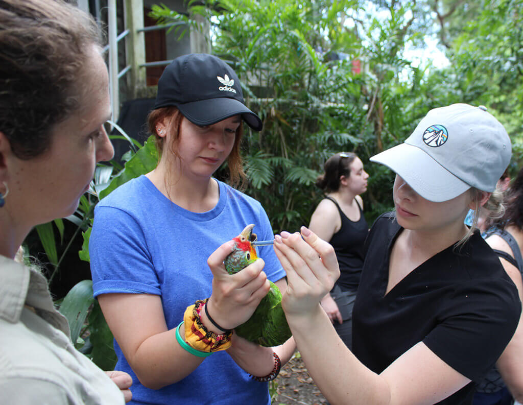 A partipicant holds a bird while another participant practices treatment