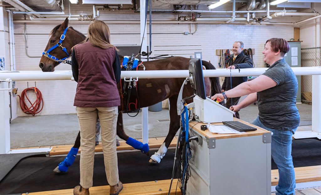A horse begins to run on a large indoor treadmill as the team stands alongside