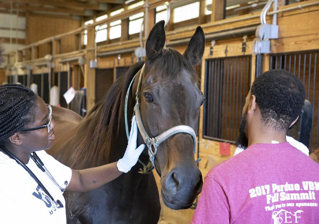 Vet Up participant touches the side of a horse's face as others stand around the horse