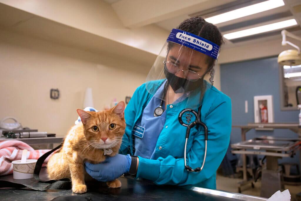 Veterinary Nursing student examines a feline pet professor