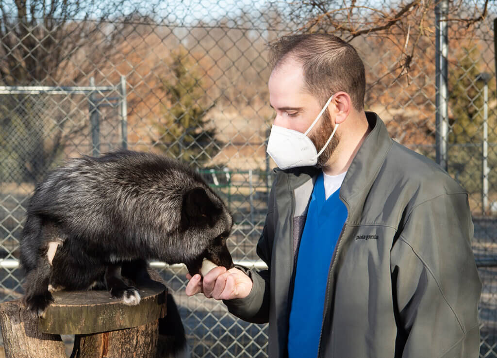 Chris wears a mask outside at Wolf Park as he holds out an egg that Joker the fox puts in his mouth