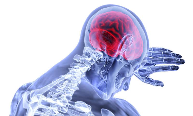 A human model illustration highlighting the brain