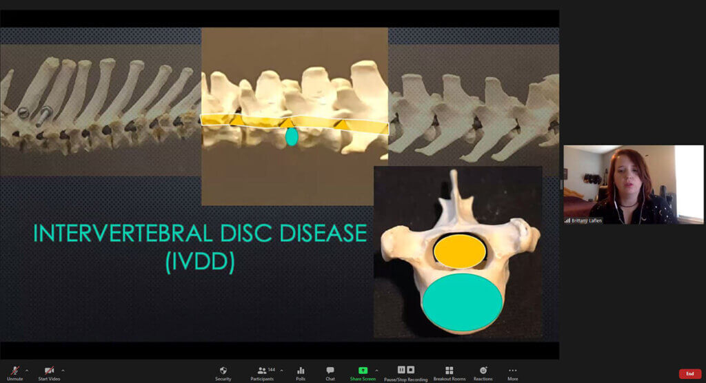 A screenshot of Brittany presenting a virtual lecture with the current slide focusing on intervertebral disc disease