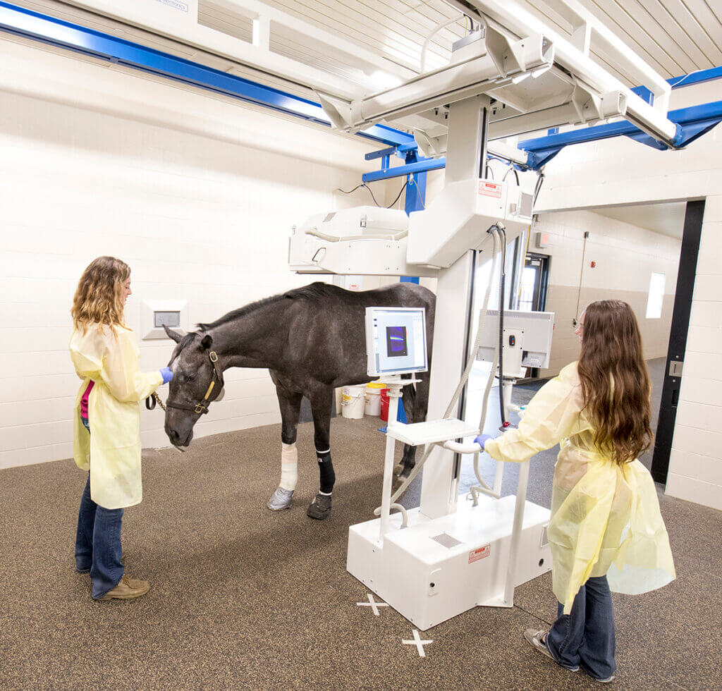 Veterinary nurses scan a horse with the nuclear scintigraphy machine