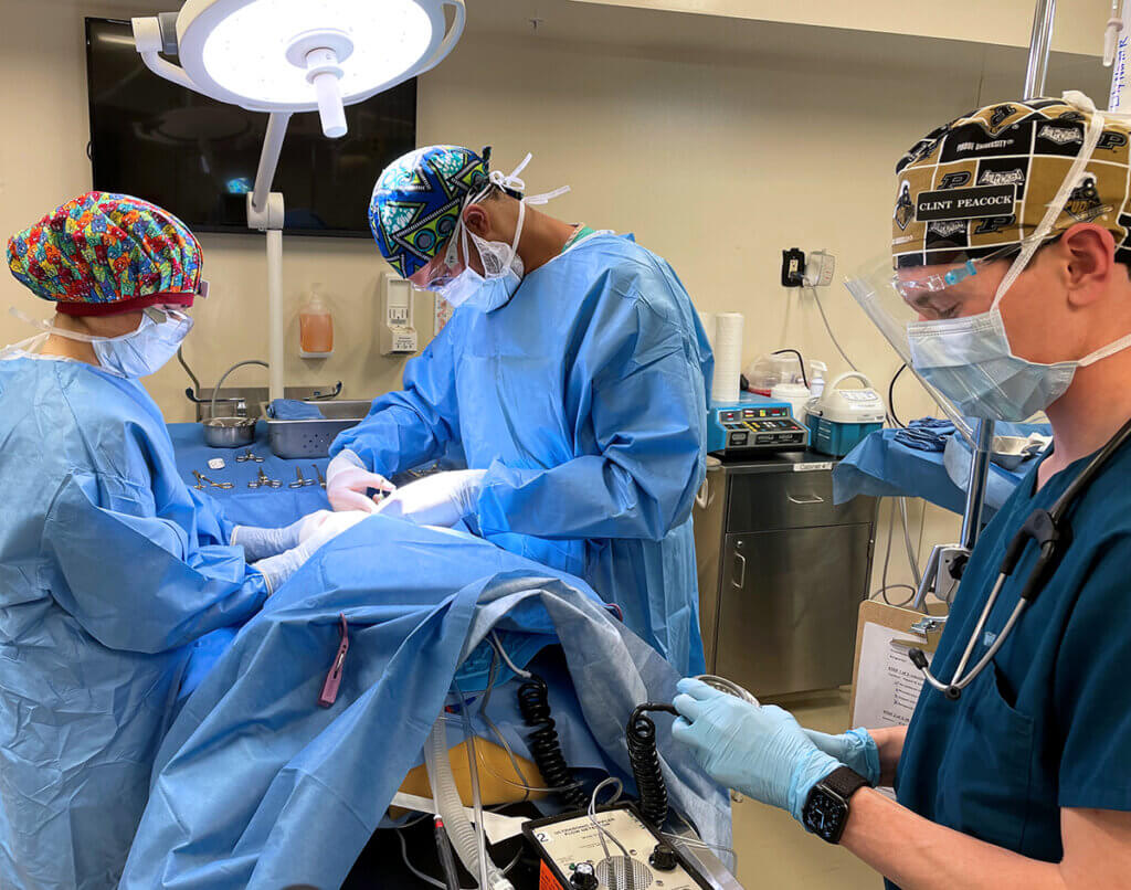 Three veterinary students surround a surgery table covered in a blue surgical cloth