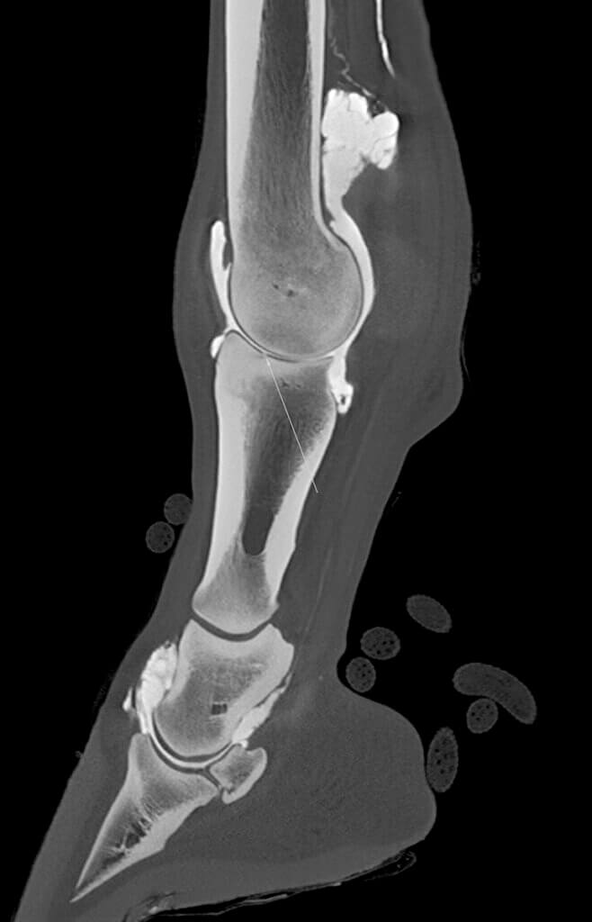 A digital scan showing the side of the horse's leg
