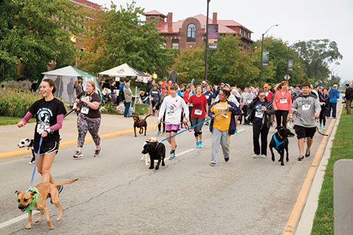 Sign up for the Purdue Dog Jog!