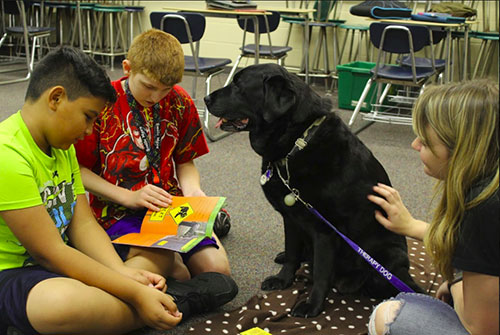 Big Daisy (Lab Dog Class of 2016) and Leslie Lundewall, along with several other Pets for People teams, visited Wainright Middle School in Lafayette during the fall semester to participate in a program in which the schoolchildren read to the animals.
