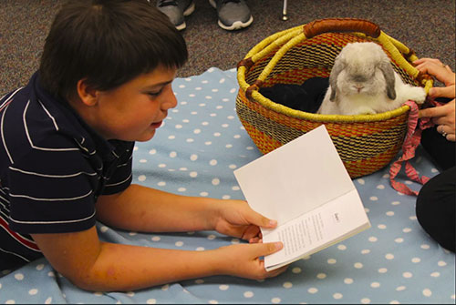 Eoghan the Bunny (with Mallory Stuckwisch) listens as a Wainwright Middle School student reads.