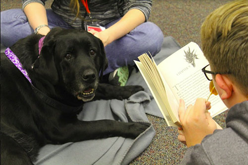 A Wainright Middle School student reads to Vera (Lab Dog Class of 2016) with Erika Anderson.