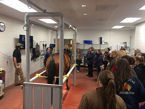 Dr. Sandy Taylor gives an equine endoscopy demonstration in the Large Animal Hospital during the 2018 Horseman's Forum.